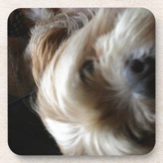 Ollie dog lhasa apso head upside down surprise beverage coaster