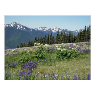 Olympic Mountains Meadow Landscape Poster