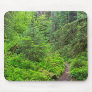 Olympic National Park, Forest trail Mouse Pad