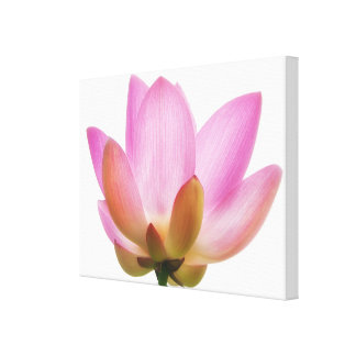 Om Lotus Pink Flower Petals Stretched Canvas Print