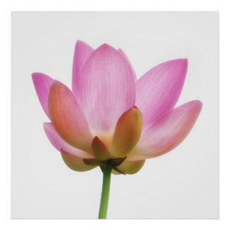 Om Lotus Pink Flower Petals Print