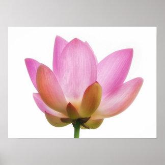 Om Lotus Pink Flower Petals Poster