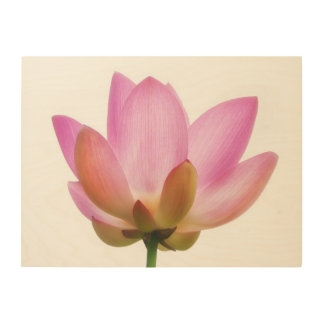 Om Lotus Pink Flower Petals Wood Canvas