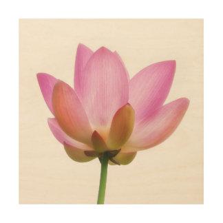 Om Lotus Pink Flower Petals Wood Prints