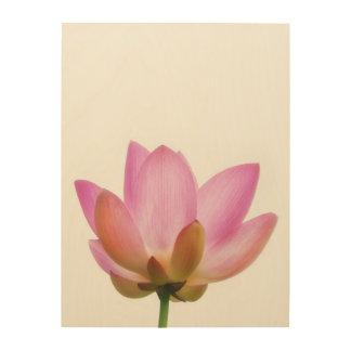 Om Lotus Pink Flower Petals Wood Canvases