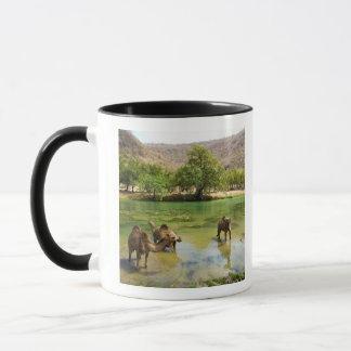 Oman, Wadi darbat, dromedaries pasturing in the Mug