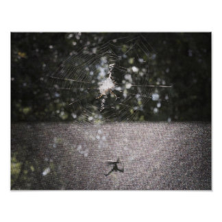 Ombre du tisserand de globe - photo d'araignée poster