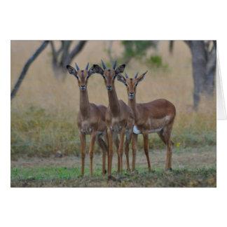 On Alert - Impala Card