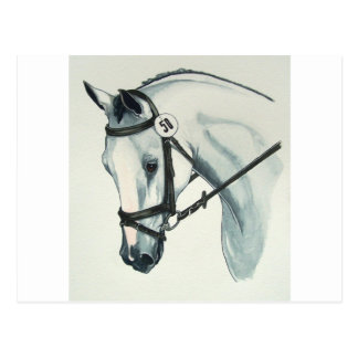 On Contact WHITE Dressage Horse Postcard