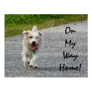 On My Way Home Doggie Postcard