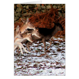 On your marks (deer) card