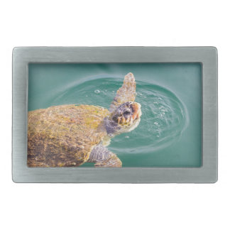 One big swimming sea turtle Caretta Belt Buckle