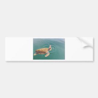 One big swimming sea turtle Caretta Bumper Sticker