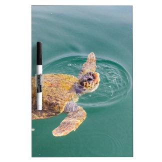 One big swimming sea turtle Caretta Dry Erase Whiteboard
