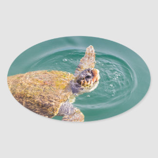 One big swimming sea turtle Caretta Oval Sticker