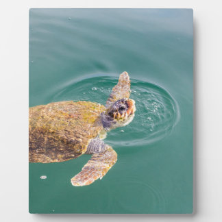 One big swimming sea turtle Caretta Plaque