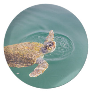 One big swimming sea turtle Caretta Plate