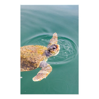 One big swimming sea turtle Caretta Stationery