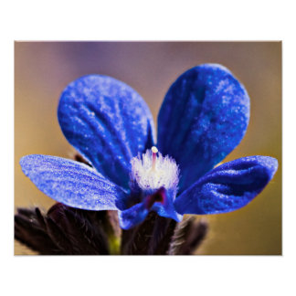 One Blue Flower Poster