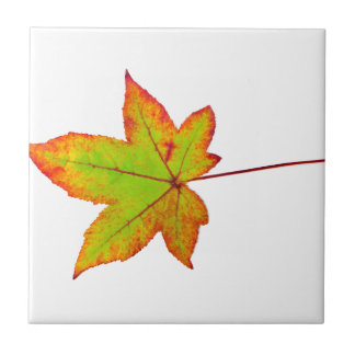 One colorful maple leaf in autumn on white ceramic tile