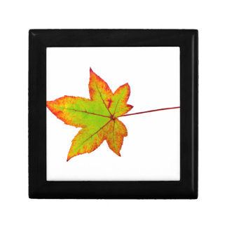 One colorful maple leaf in autumn on white gift box