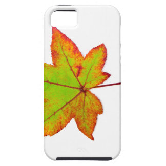 One colorful maple leaf in autumn on white iPhone 5 case