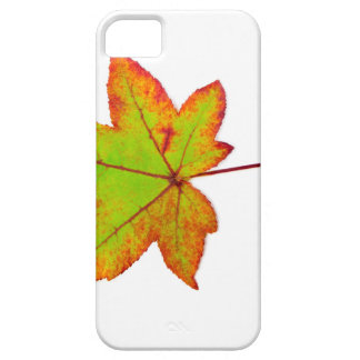 One colorful maple leaf in autumn on white iPhone 5 cases