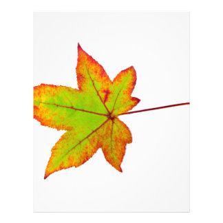 One colorful maple leaf in autumn on white letterhead