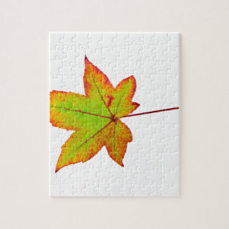 One colorful maple leaf in autumn on white puzzle