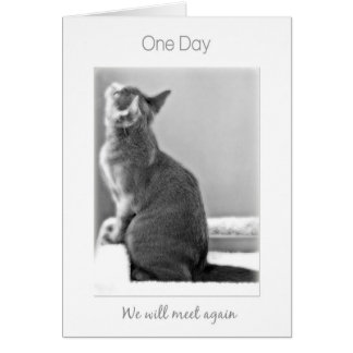"""One Day We'll meet again"" cat sympathy Card"