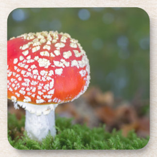 One fly agaric with green moss in fall season coaster