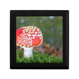 One fly agaric with green moss in fall season gift box