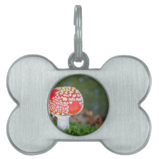One fly agaric with green moss in fall season pet ID tag