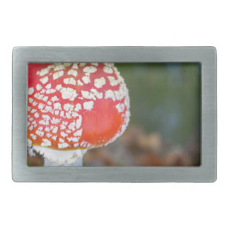 One fly agaric with green moss in fall season rectangular belt buckle