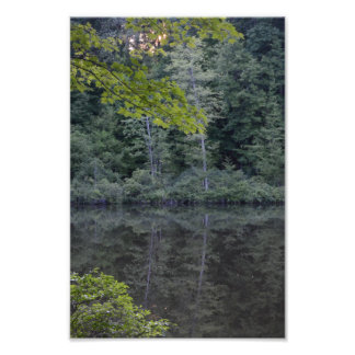 One Midsummer s Evening in the Woods Photo Print