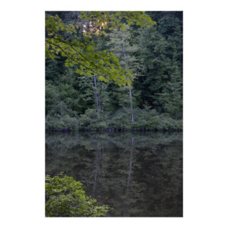 One Midsummer s Evening in the Woods Poster Print
