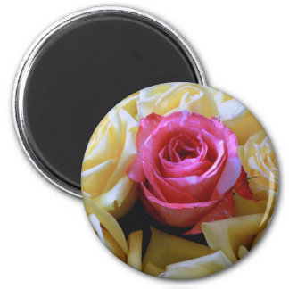 One of a Kind Love, Unique Beauty Pink Yellow Rose 2 Inch Round Magnet