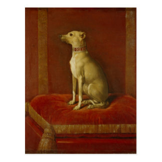 One of Frederick II's Italian greyhounds Postcard