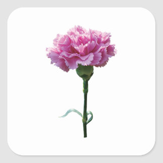 One Pink Carnation Square Sticker