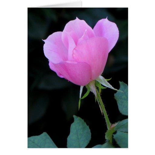 One Pink Rosebud Card