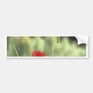One Poppy Bumper Sticker