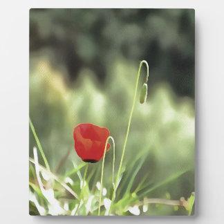 One Poppy Plaque