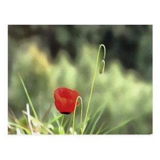 One Poppy Postcard