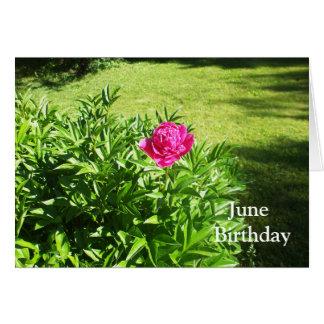 One Pretty Rose Flower Card