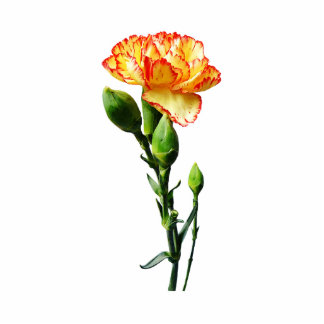 One Red-Tipped Yellow Carnation Acrylic Cut Out