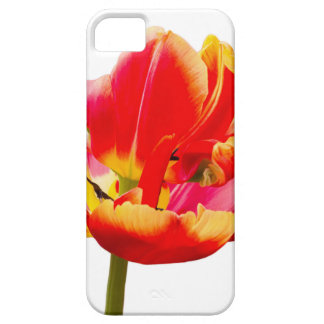 One red tulip flower on white background iPhone 5 cover
