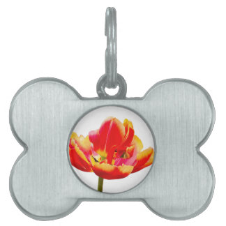 One red tulip flower on white background pet tags