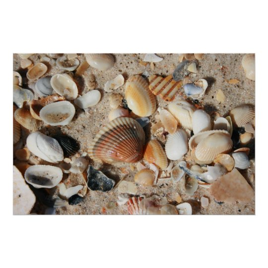 One square foot of shells poster