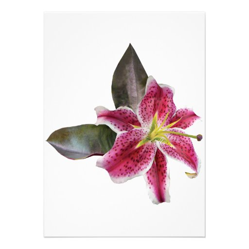 One Stargazer Lily Personalized Announcement