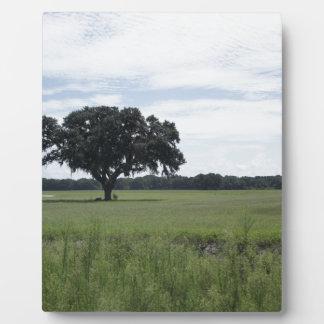 One Tree Plaque